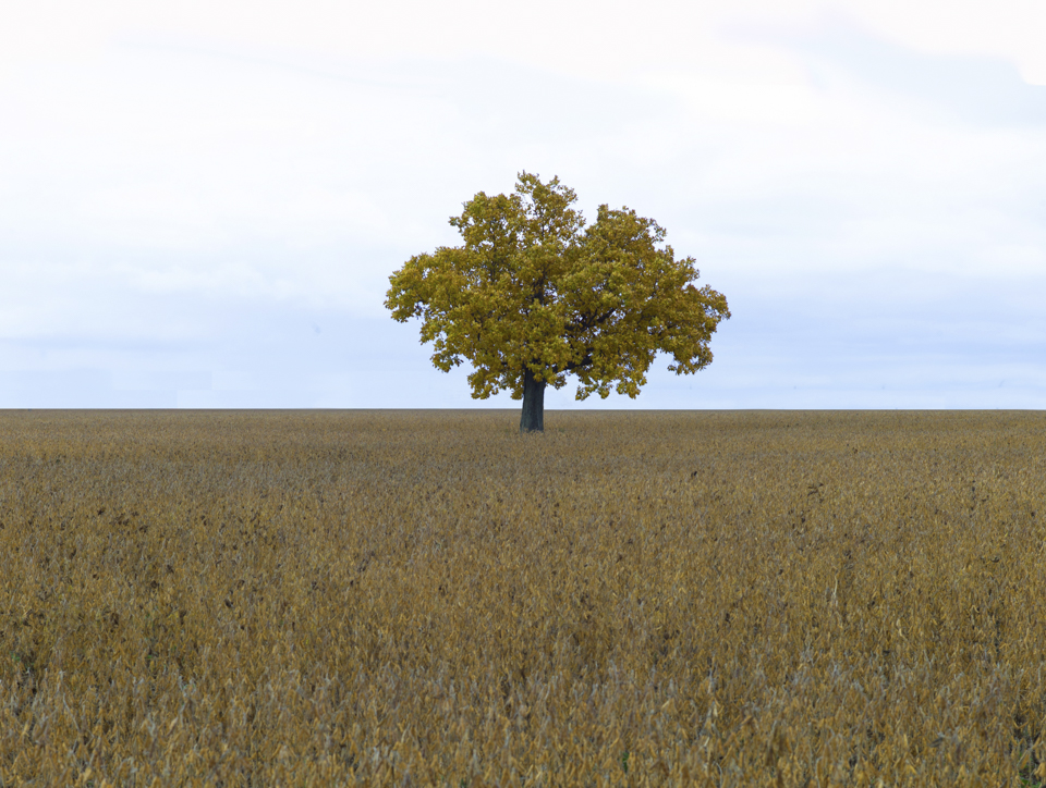 tree960
